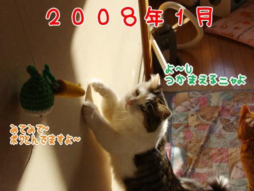 2008.1.jpg