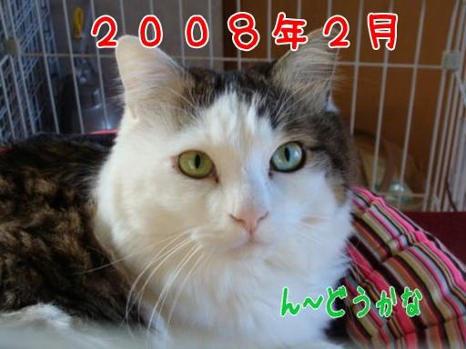 2008.2haore.jpg