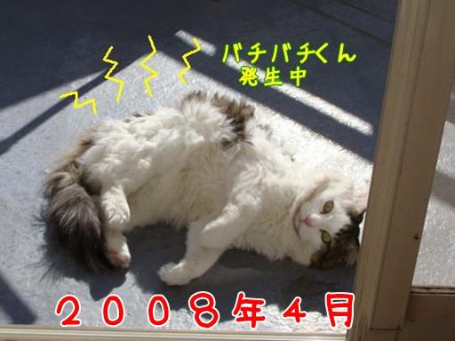 2008.4.jpg