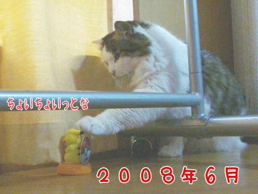 2008.6.jpg