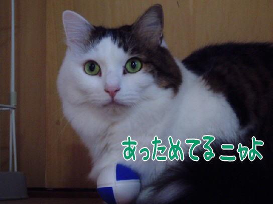 2007.8.jpg