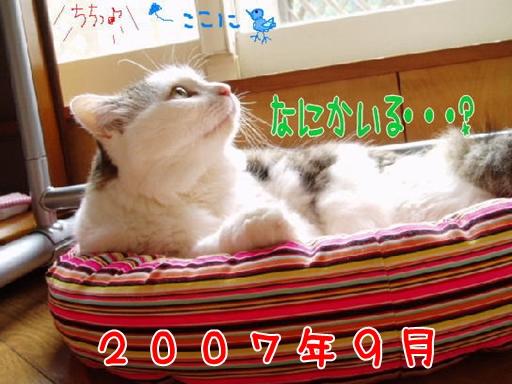 2007.9.jpg