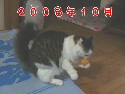 2008.10.jpg