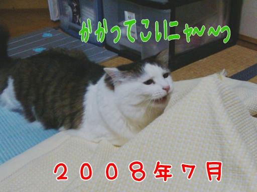 2008.7(2).jpg