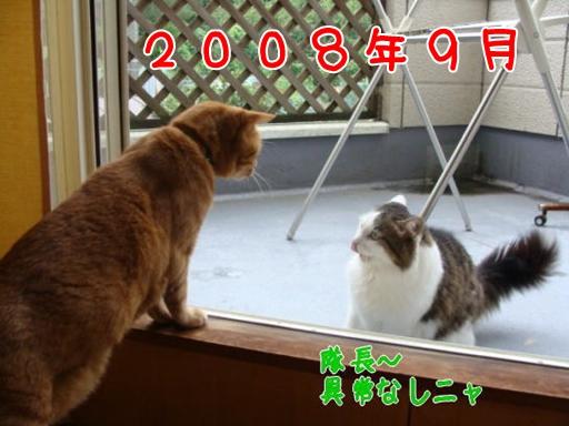 2008.9.jpg
